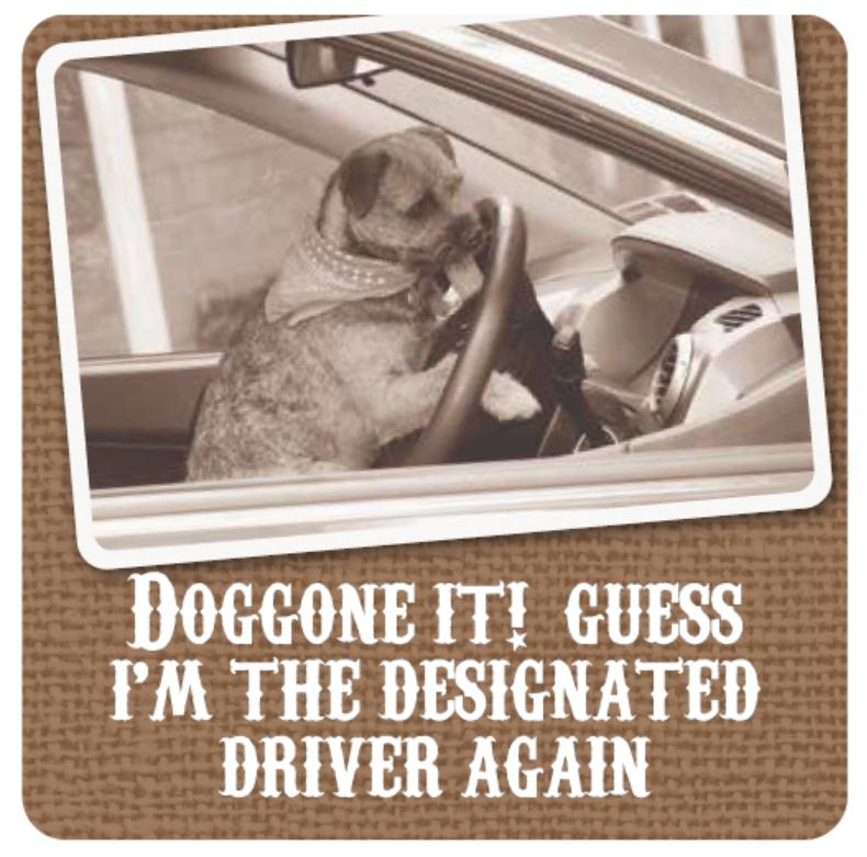 Doggone it? Guess I'm the designated driver again