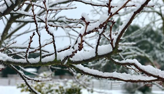 20170712 - Snow Pic