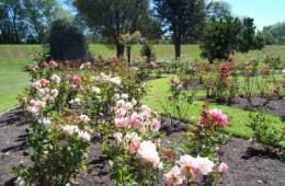 Scott-Rose-Garden