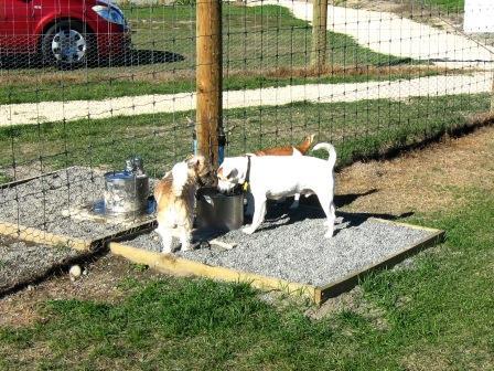 Millton Ave dog park