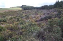 ForestdaleWetland
