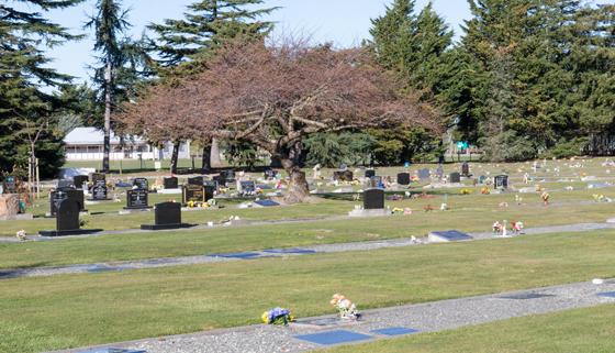 Rangiora Cemetery looking east