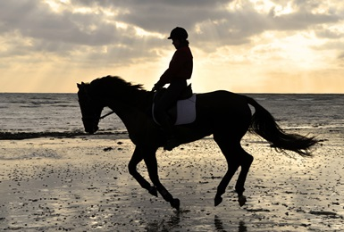 Horse-Rider-resized