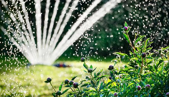 Sprinkler watering a garden at dusk