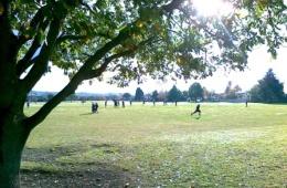 Ashgrove-Park
