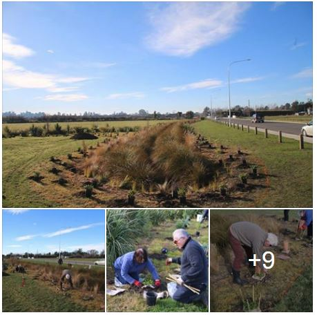 Koura Reserve Planting Day
