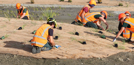 planting in Beswick Stormwater Management Area thumb