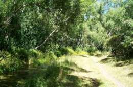 Silverstream-Reserve