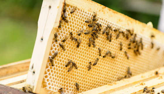 Community Board Abuzz for New Bee Hives thumbnail image.