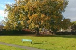 Oak-Tree-Reserve