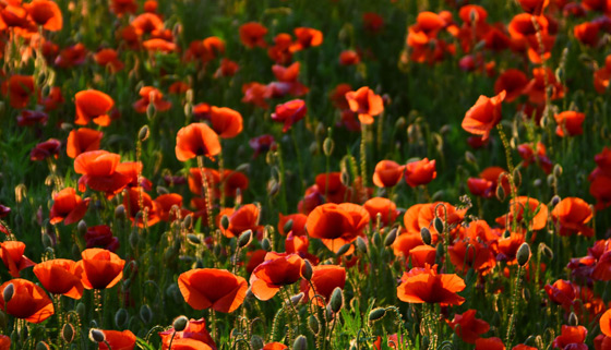 Council Services Over Anzac Weekend thumbnail image.